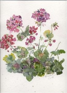 Purple Geraniums