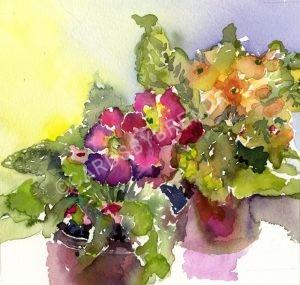 Smiling Primulas