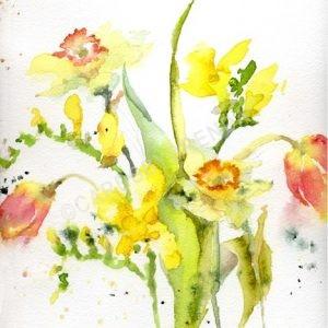 Tulips Freesias and Daffodils